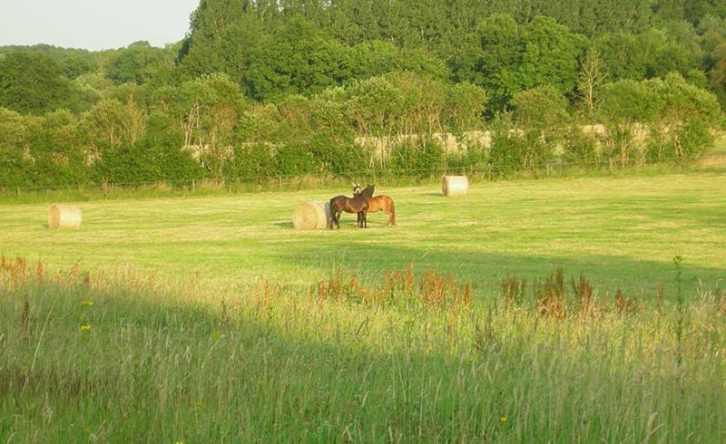 Two horses on a meadow near La Chevrie at Haras de Chenes, Frankreich