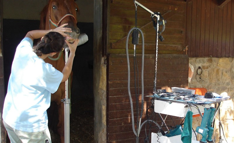A dentiste with a horse