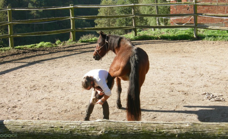 Toni inspects the hooves of Jumpy