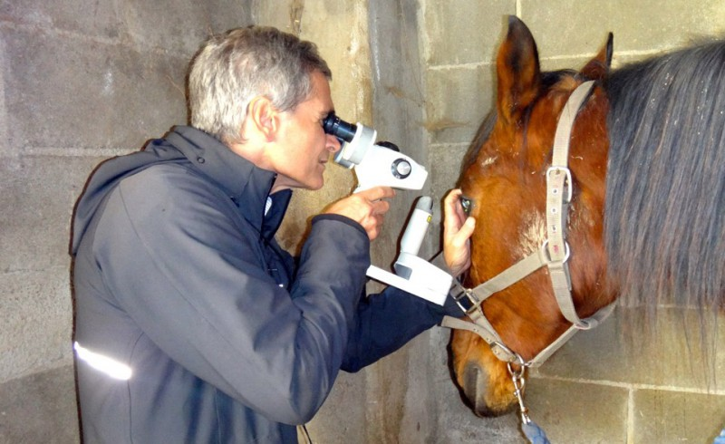 An oculist with a horse