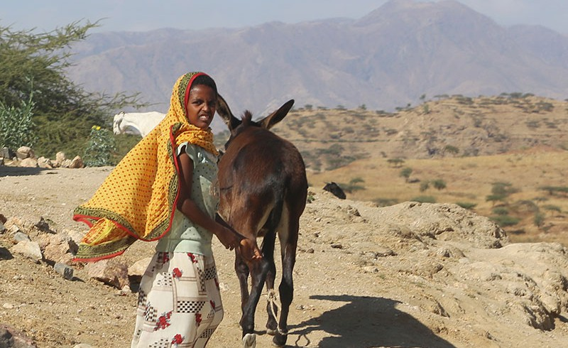 A girl with a donkey in Eritrea
