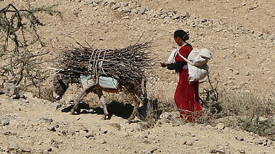 A woman is transporting wood with the help of a donkey.